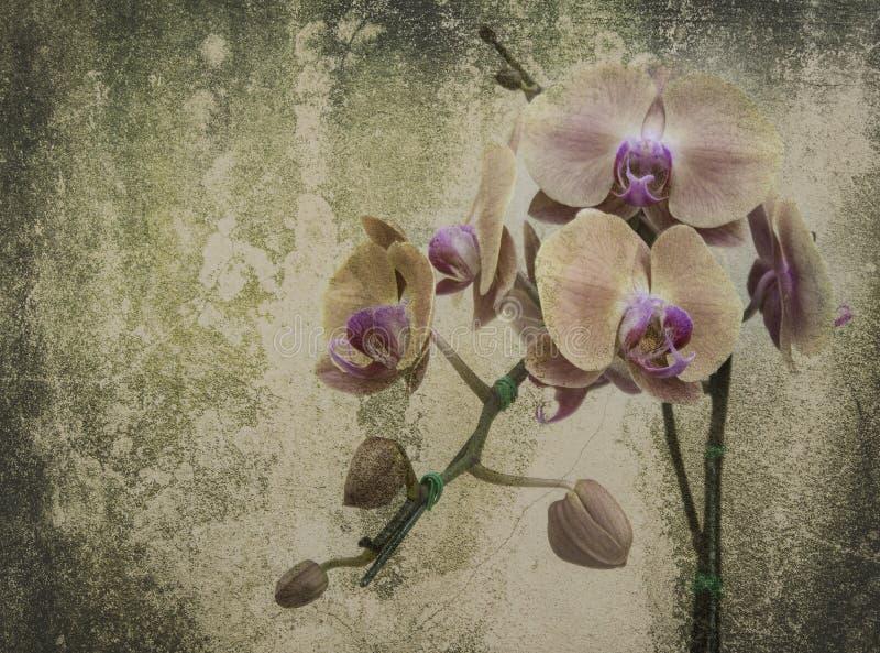 Orkidén på svarta den gamla designbilden och tappning blommar royaltyfri bild
