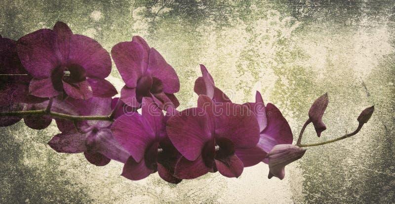 Orkidén på svarta den gamla designbilden och tappning blommar royaltyfri fotografi