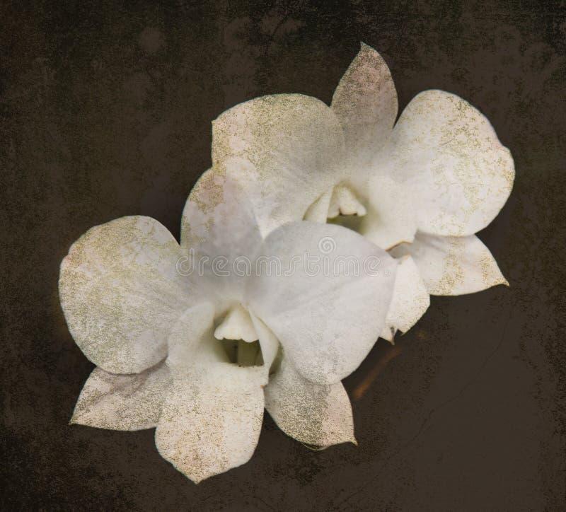 Orkidén på svarta den gamla designbilden och tappning blommar fotografering för bildbyråer