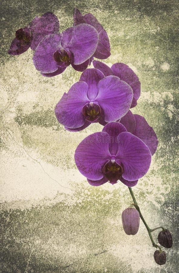 Orkidén på svarta den gamla designbilden och tappning blommar royaltyfria bilder