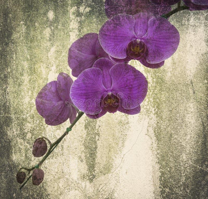 Orkidén på svarta den gamla designbilden och tappning blommar arkivbild