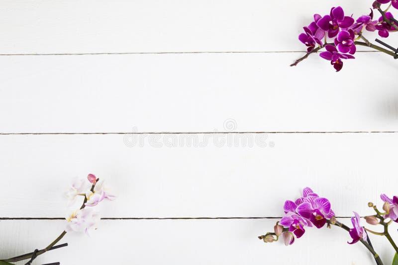 OrkidéPhalaenopsis arkivfoto