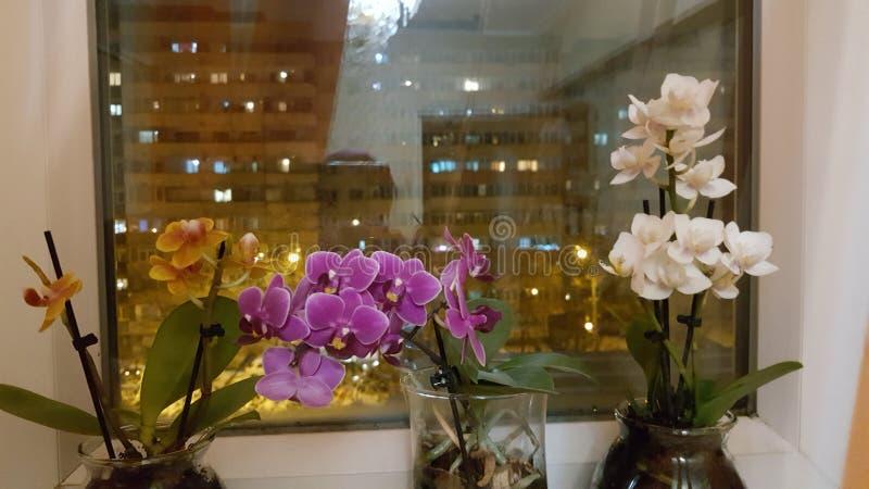Orkidér i natten royaltyfria foton