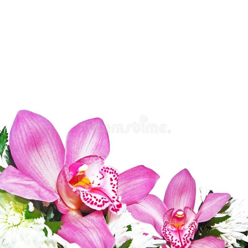 Orkidér med krysantemum fotografering för bildbyråer