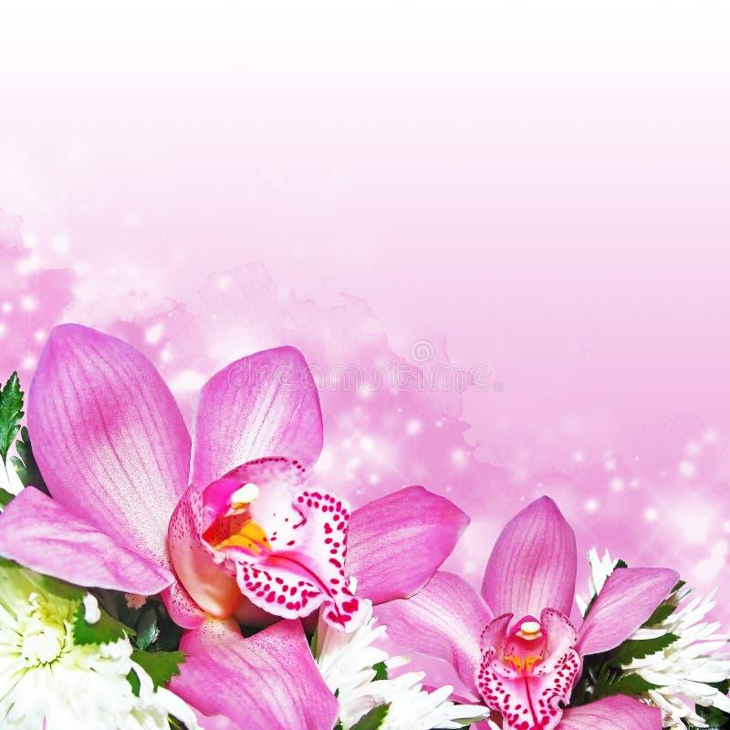 Orkidér med krysantemum royaltyfri fotografi