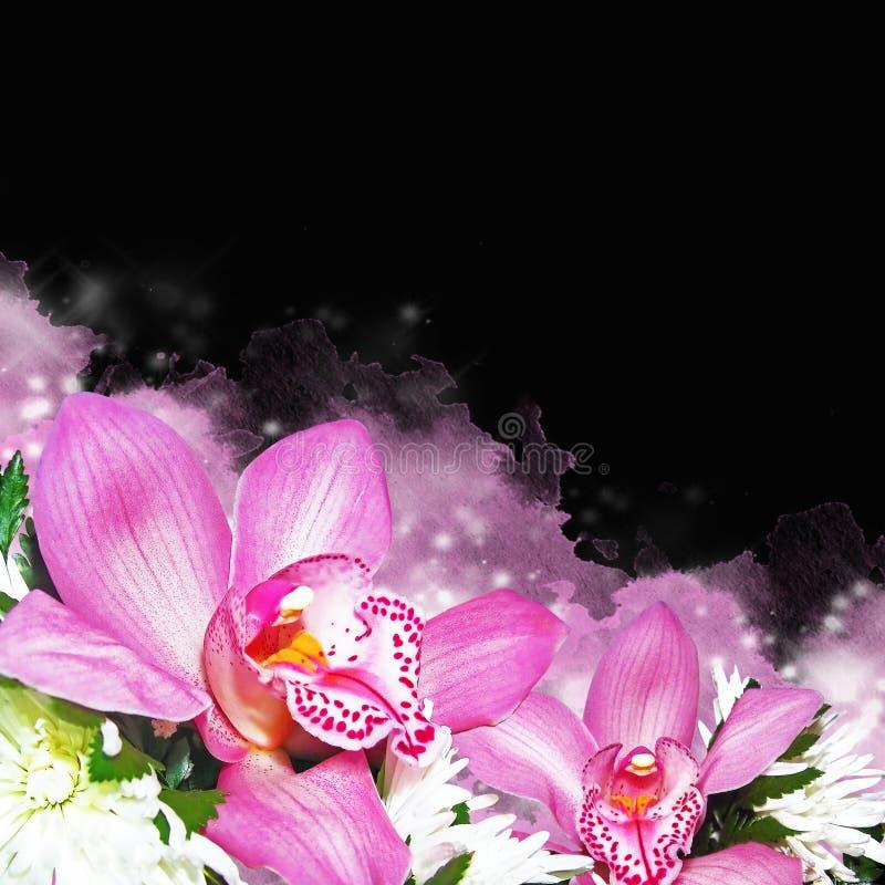 Orkidér med krysantemum royaltyfri foto