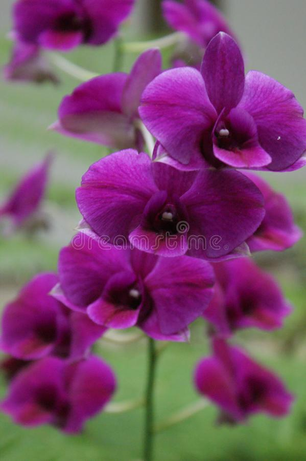 Orkidérna som ställer ut deras skönhet royaltyfria bilder