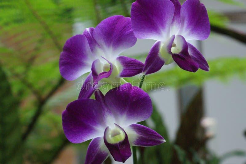 Orkidérna som ställer ut deras skönhet royaltyfri bild
