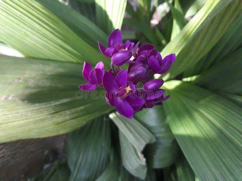 orkid 免版税库存照片