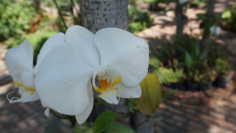 Orkid? royaltyfri bild
