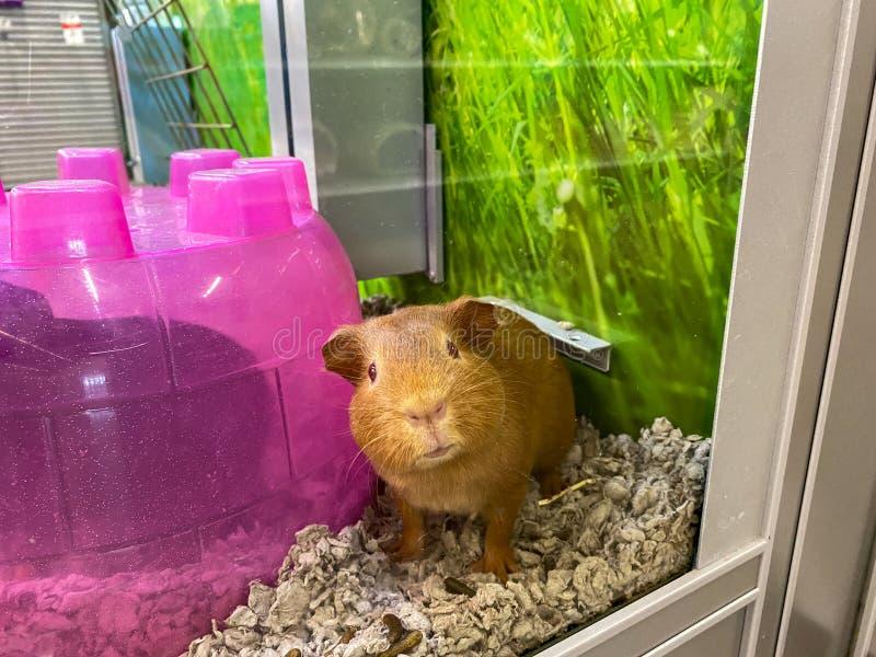 Long Haired Hamster Petsmart 82