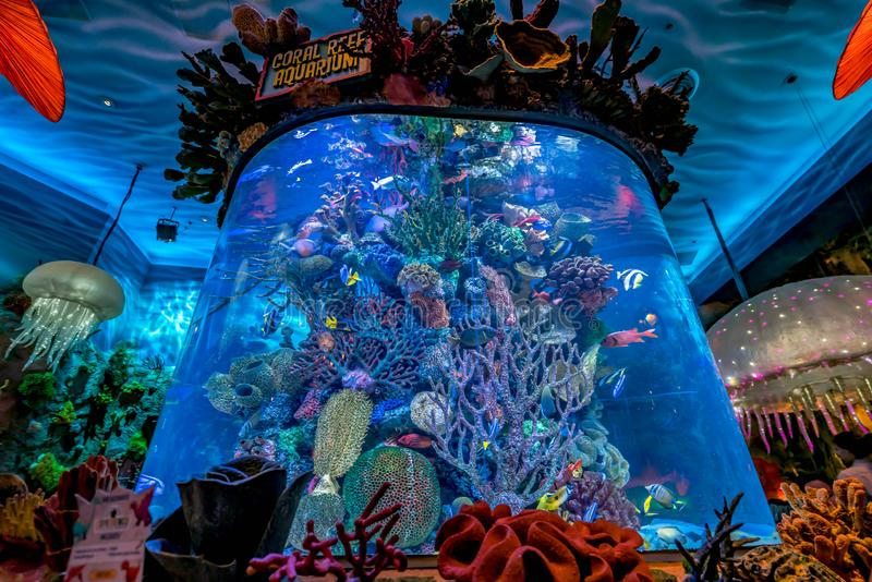 Orlando, Florida - December 2017: Colorful T-rex Restaurant Cafe with sea fishes and animals at Lake Buena Vista. Orlando, Florida - December 2017: Colorful T royalty free stock photography