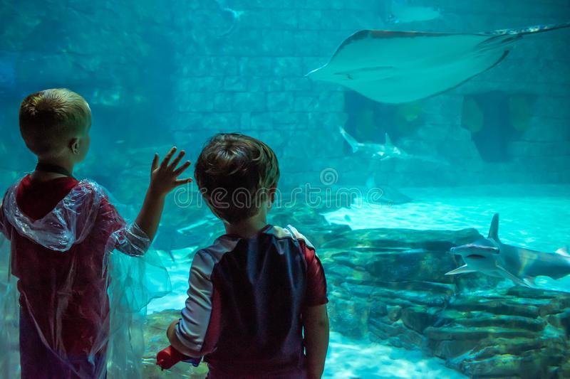 Children watching manta rays and sharks in Aquarium at Seaworld 1 royalty free stock photography