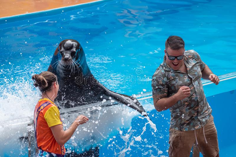 Lovable sea lion splashing the public man with his fin in Sea Lion High show at Seaworld 4. Orlando, Florida. July 26, 2019. Lovable sea lion splashing the royalty free stock photo