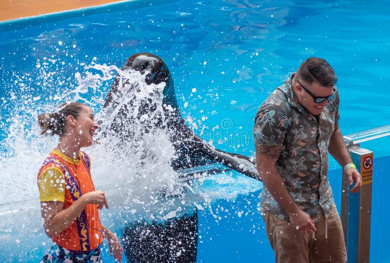Lovable sea lion splashing the public man with his fin in Sea Lion High show at Seaworld 2. Orlando, Florida. July 26, 2019. Lovable sea lion splashing the royalty free stock image