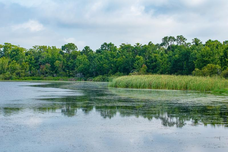 Partial view of green forest, swamp vegetation and blue lake. royalty free stock photography