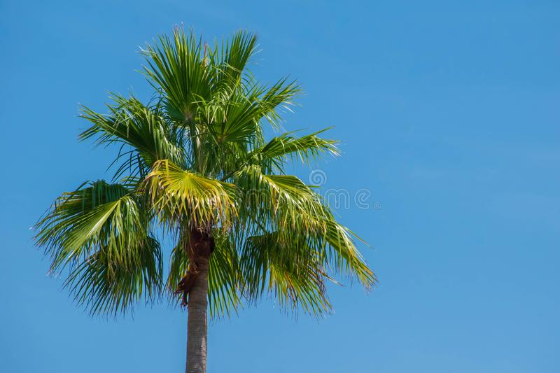 Top view of palm tree in gardens of JW Marriott hotel 2. Orlando, Florida. July 16, 2019. Top view of palm tree in gardens of JW Marriott hotel 2 royalty free stock photos