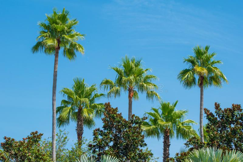 Top view of palm trees in gardens of JW Marriott hotel. stock image
