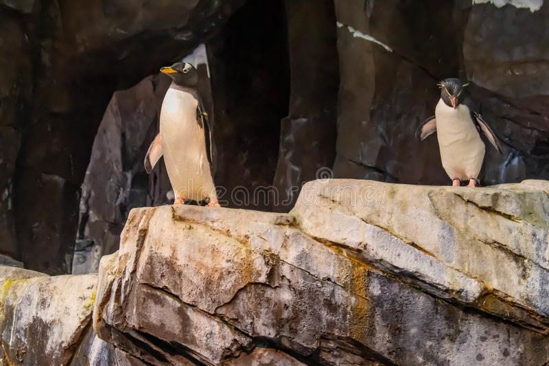 Antarctica Empire of the Penguin at Seaworld 50. Orlando, Florida. June 17, 2019. Antarctica Empire of the Penguin at Seaworld 50 stock images