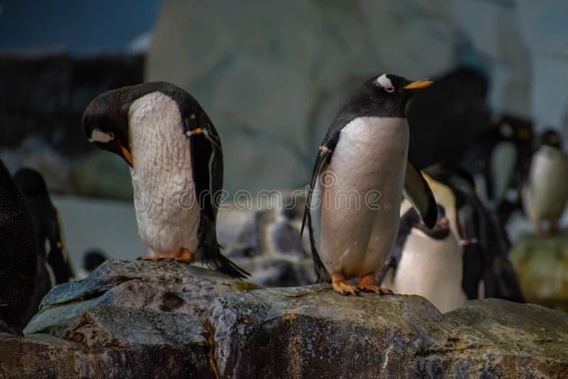Antarctica Empire of the Penguin at Seaworld 39. Orlando, Florida. June 17, 2019. Antarctica Empire of the Penguin at Seaworld 39 stock image