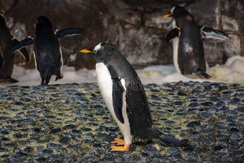 Antarctica Empire of the Penguin at Seaworld 52. Orlando, Florida. June 17, 2019. Antarctica Empire of the Penguin at Seaworld 52 royalty free stock photography