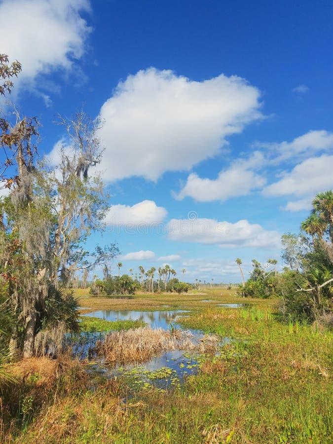 Orlando Wetlands Park royaltyfri foto