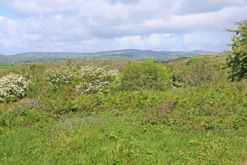 Orley-Common, Devon stockfotografie