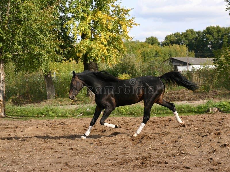 Download Orlovtrotter arkivfoto. Bild av trees, häst, mane, köra - 276186