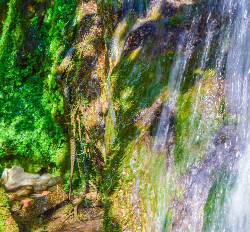 Orm och vattenfall royaltyfri foto