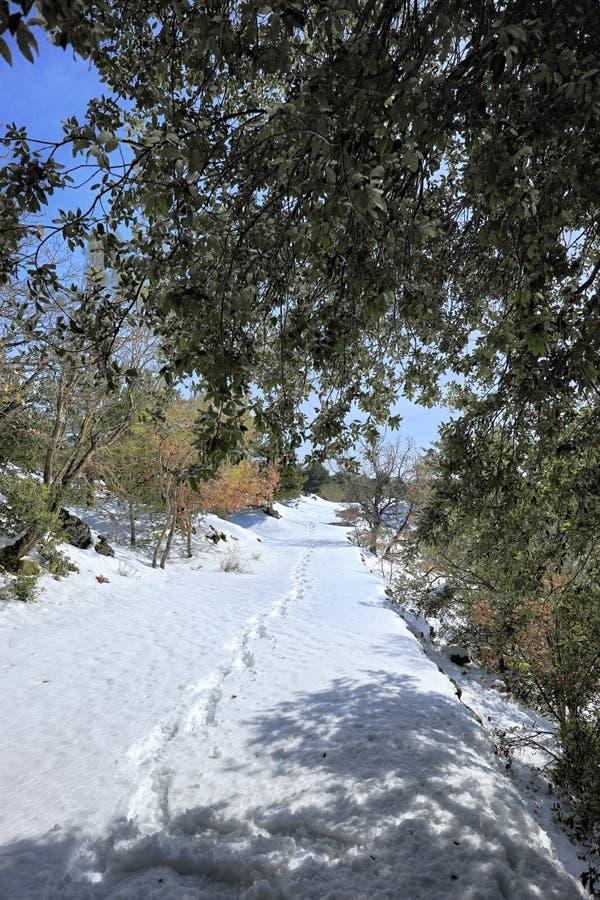 Orma delle racchette da neve sul percorso innevato in Etna Park fotografie stock