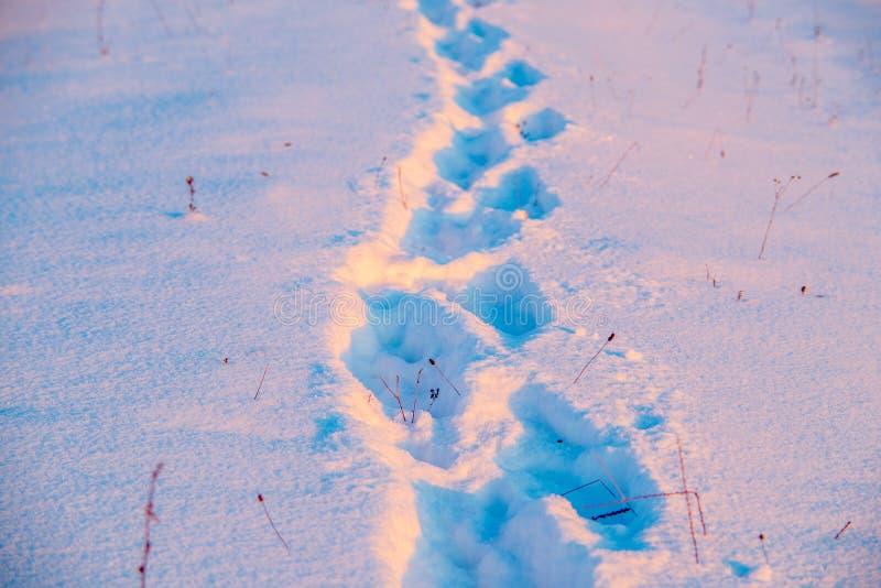 orma nella neve di inverno immagine stock libera da diritti