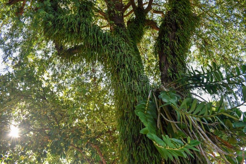 Ormbunkar i fuktiga skogar med solljus arkivfoton