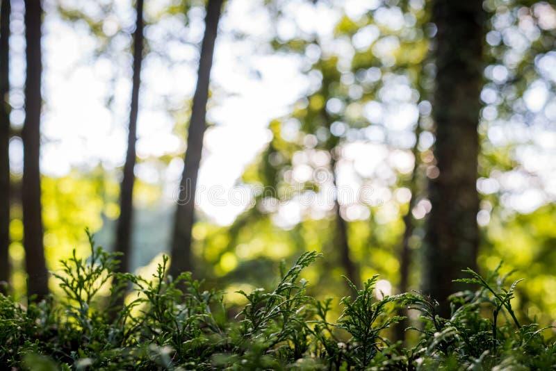 Ormbunkar p? ing?ngen av skogskogen p? en h?rlig solig sommardag royaltyfria bilder