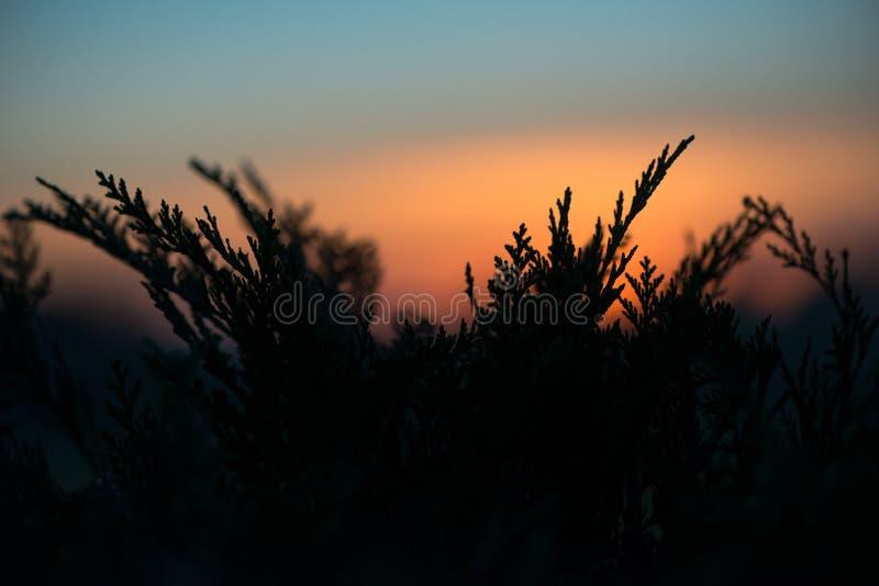 Ormbunkar på solnedgången royaltyfri fotografi