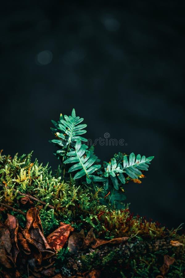 Ormbunke i ljus i skog royaltyfria bilder