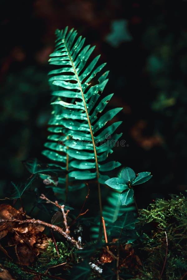 Ormbunke i ljus i skog arkivfoton
