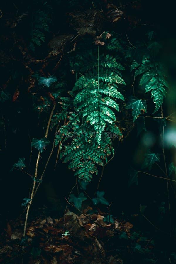 Ormbunke i ljus i skog arkivfoto
