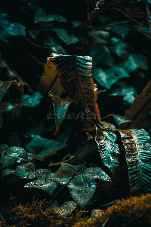 Ormbunke i ljus i skog royaltyfri bild