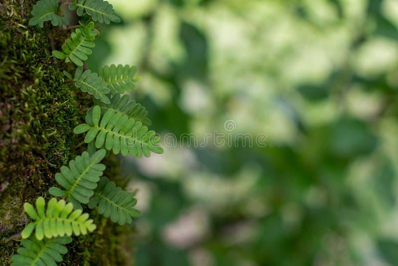 Ormbunke, mossa och texturerade gröna sidor i skogen arkivbilder
