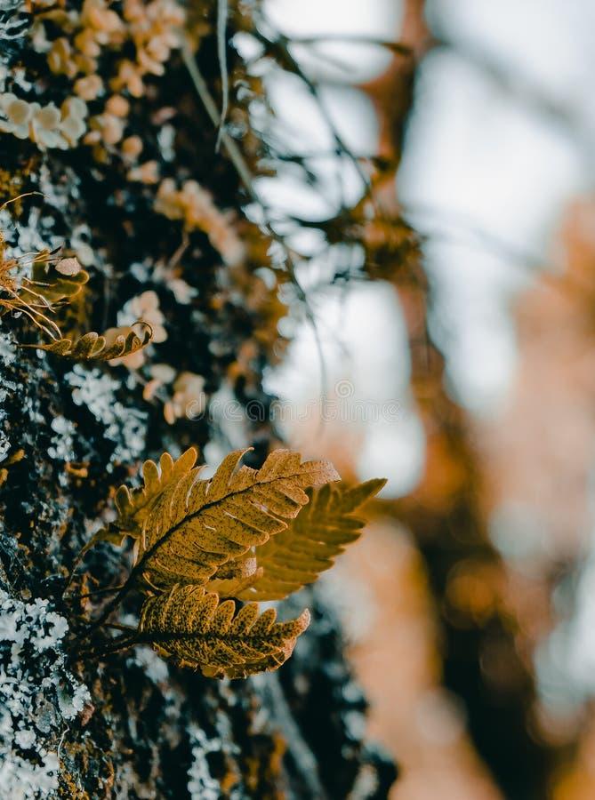 Ormbunke som växer i ett träd arkivfoton