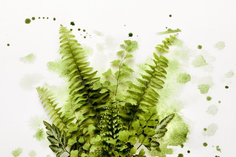 Ormbunkeblad i grön målarfärg vektor illustrationer