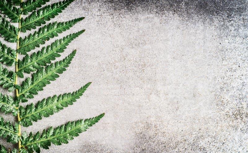 Ormbunkeblad på grå lantlig konkret bakgrund fotografering för bildbyråer