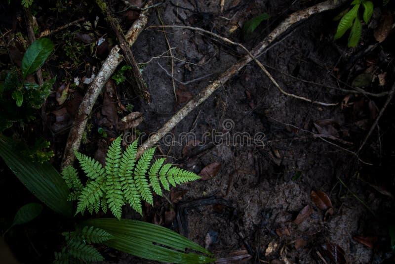 Ormbunkeblad på jordningen arkivbilder