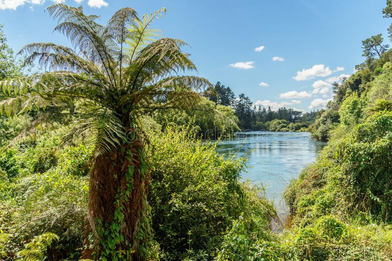 ormbunkebuskar på flodbanken på den soliga dagen, Huka faller, fotografering för bildbyråer