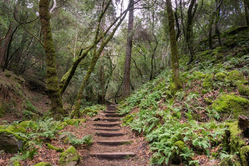 Ormbunken fodrade att fotvandra slingan, Sugarloaf Ridge State Park, Sonoma County, Kalifornien royaltyfria bilder