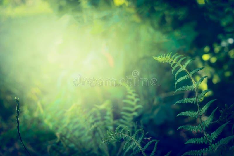 Ormbunkesidor på mörk djungel- eller rainforestnaturbakgrund arkivbild