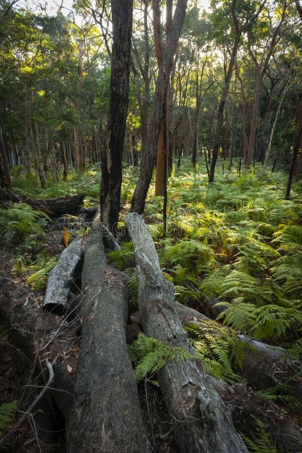 Ormbunkeskog i Munmorah tillståndsnaturvårdsområde royaltyfria foton