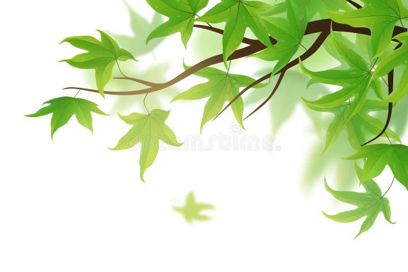 Ormbunksblad med gröna sidor stock illustrationer