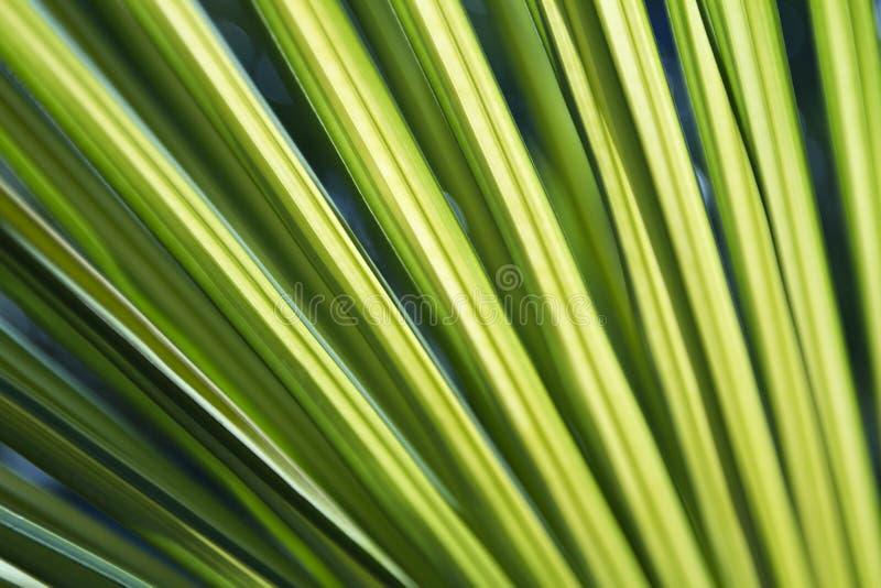 ormbunksbladgreen gömma i handflatan livligt arkivfoto