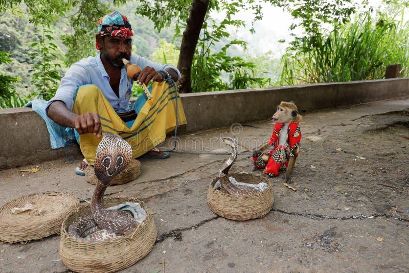Ormcharmör med kobran i Sri Lanka royaltyfri bild